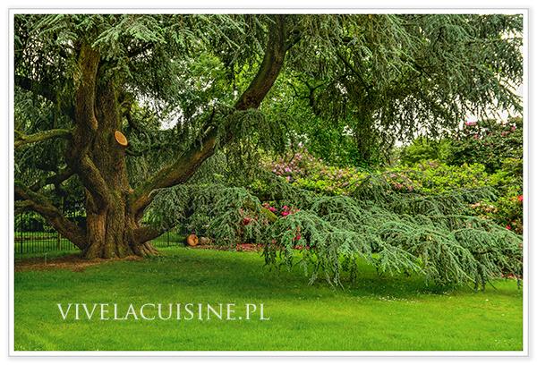 vivelacuisinepl_arboretum_10_600