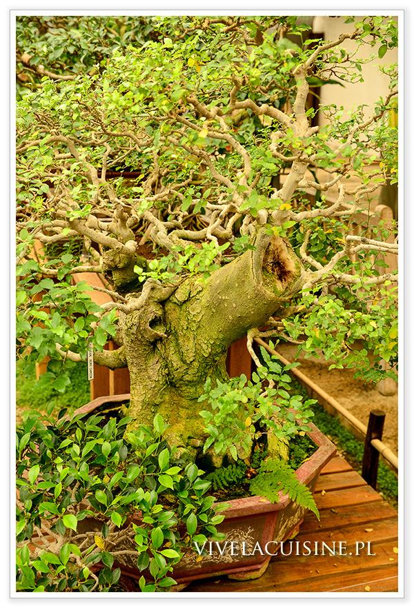 vivelacuisinepl_arboretum_13_882