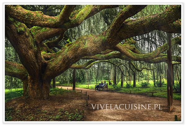 vivelacuisinepl_arboretum_5_600_01